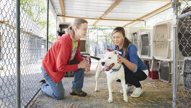 Weibliche Freiwillige, die einen Hund im Tierheim streicheln