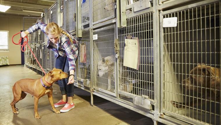Weibliche Freiwillige mit einem Hund im Tierheim