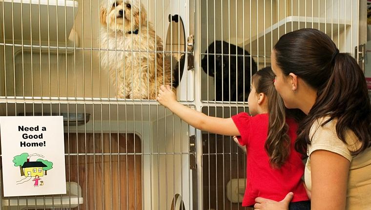 Mutter und Tochter im Tierheim