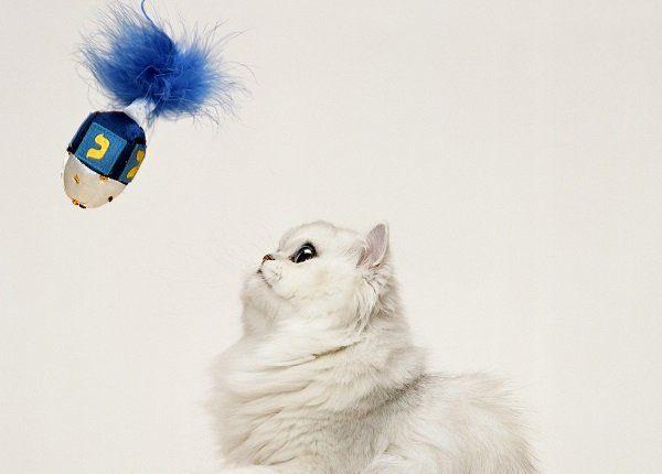 Persian cat playing with dreidel for hanukkah