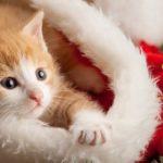20 Weihnachtskätzchen, die zum Weihnachtsmann bereit sind [PICTURES]