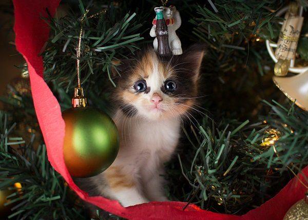 20 nette Katzen, die für ihre Weihnachtskarten aufwerfen [PICTURES]