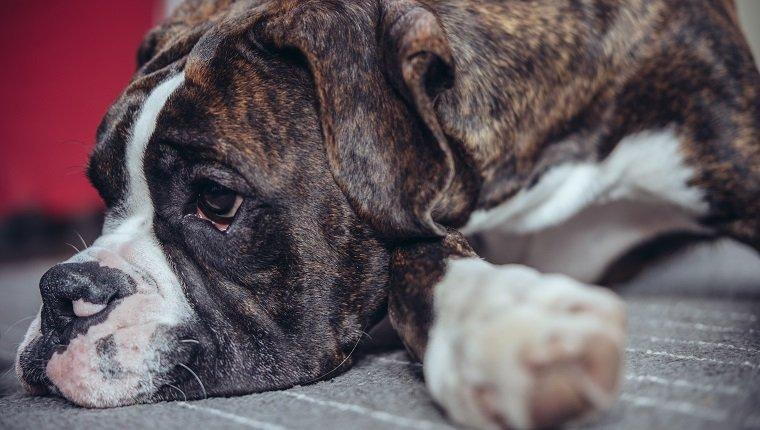 Gewichtsverlust des Hundes