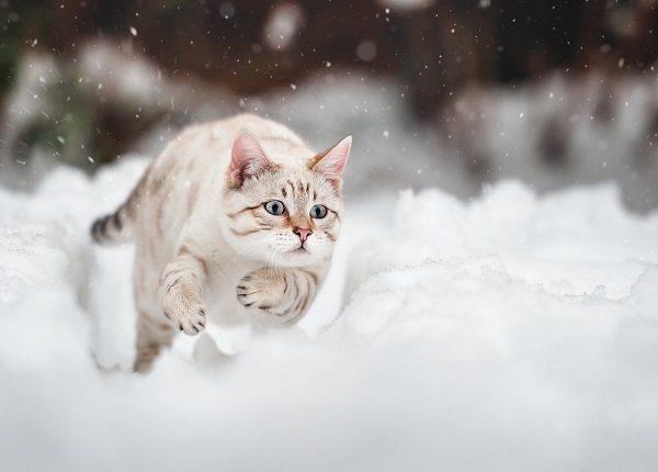 11 niedliche Katzen bei kaltem Wetter, die den Schnee lieben [PICTURES]