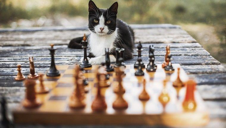 Denkspiele Für Katzen