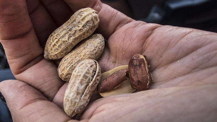 Hand hält Erdnüsse