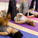 dogs in doga dog yoga session