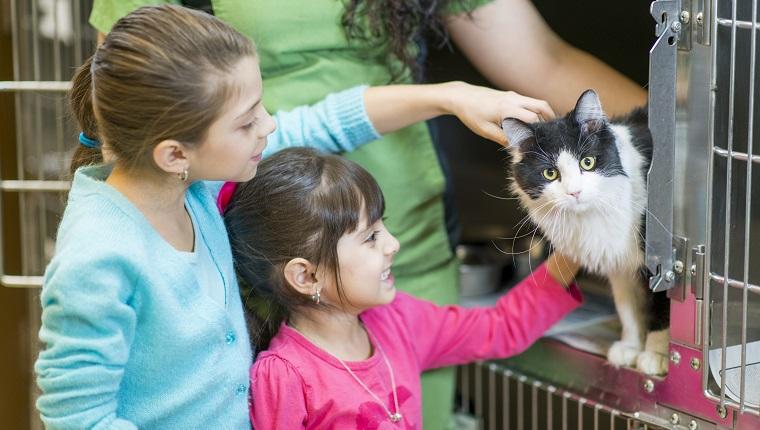 Kinder, die eine Katze auswählen, um vom Tierheim zu adoptieren.
