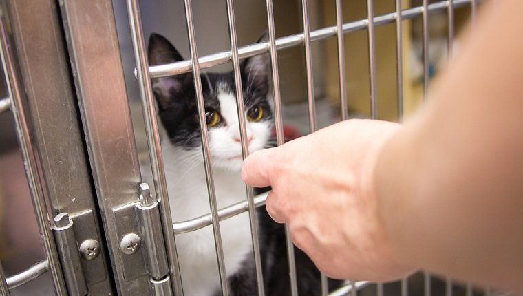 Ein Kätzchen in einem Käfig im Tierheim.