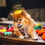 Dog New Years Eve