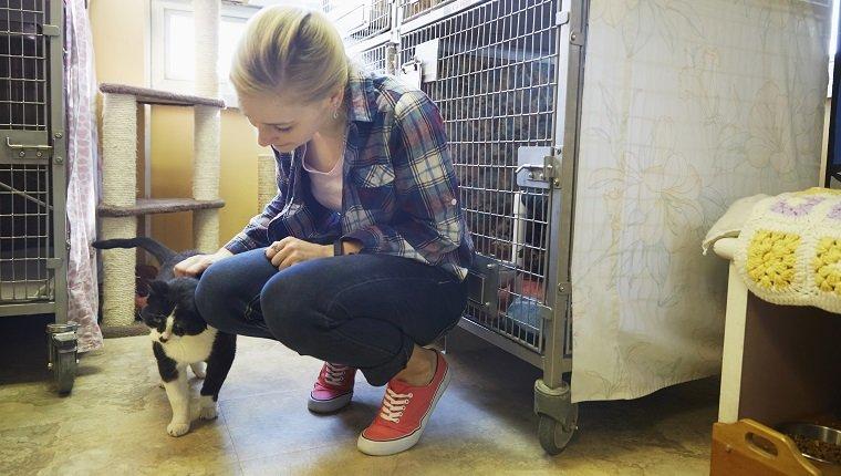Weiblicher Freiwilliger, der eine Katze im Tierheim streichelt