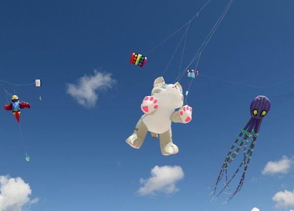 Cat kite sailing in the sky
