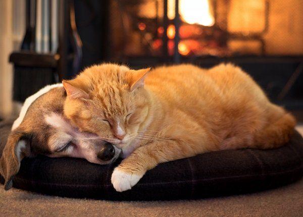 10 süße Kätzchen, die im Winter gemütlich und warm bleiben [PICTURES]