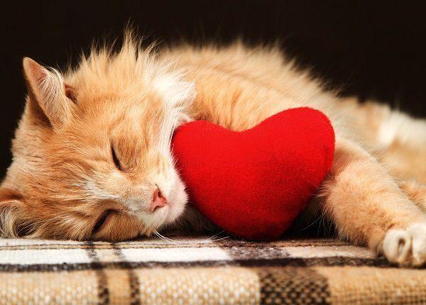 20 Katzen, die Ihr Valentinstag sein wollen [PICTURES]