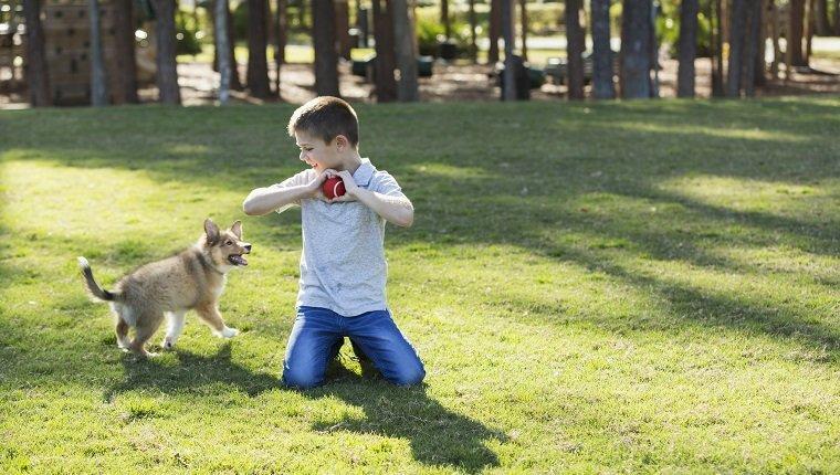 Ein 7 Jahre alter Junge spielt Fetch mit seinem Sheltie-Welpen im Park. Das Kind hält einen Ball in der Hand und will ihn werfen, damit der Hund ihn zurückholen kann.