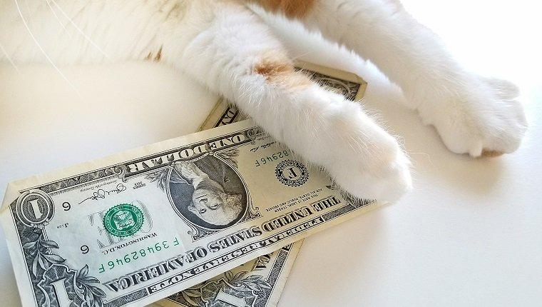 Nahaufnahme der getigerten Katze mit US-Dollar