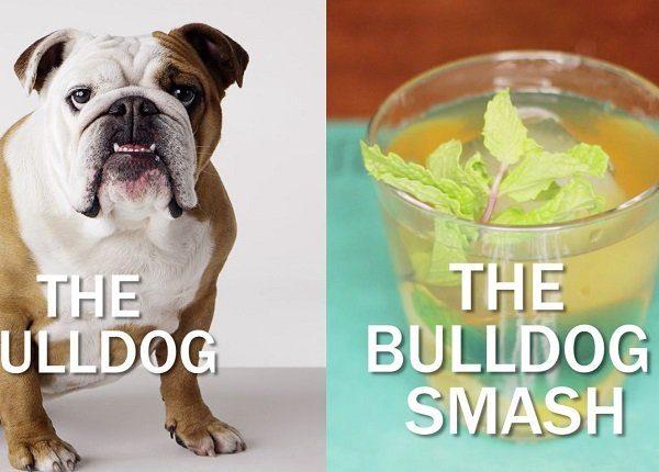 a bulldog sits next to the bulldog smash cocktail