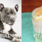 pit bull dog next to cocktail