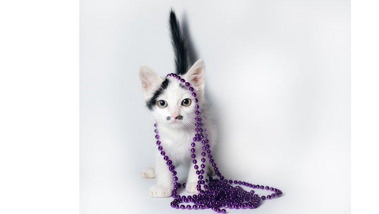 kleines Schwarzweiss-Kätzchen mit lila Perlen auf weißem Hintergrund