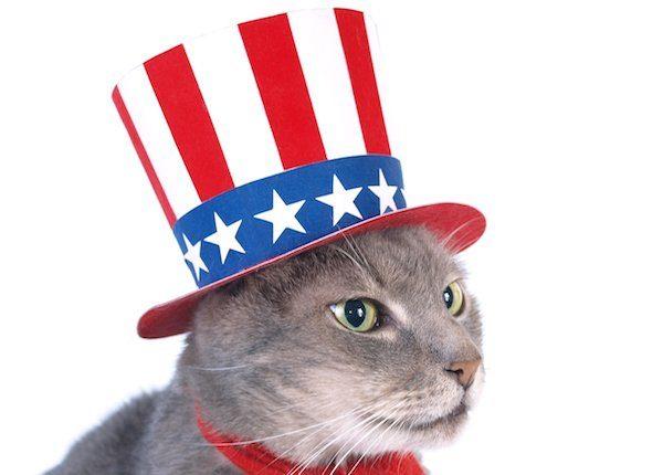 Cat in political hat