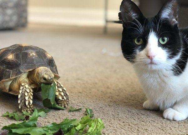 National Niemand isst allein Tag: 10 Katzen feiern mit ihren Tierfreunden [PICTURES]