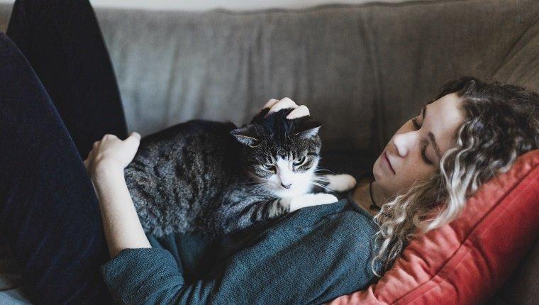 Tiersitter streichelt eine Katze während der Woche der professionellen Tiersitter