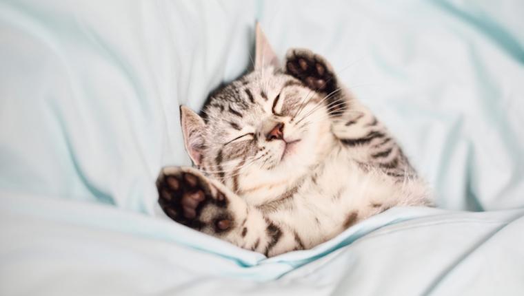 Kätzchen Nickerchen