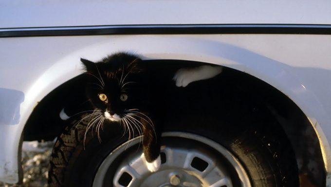 Katze im Reifen gut