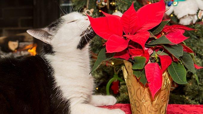 Katze schnüffelt Zimmerpflanze