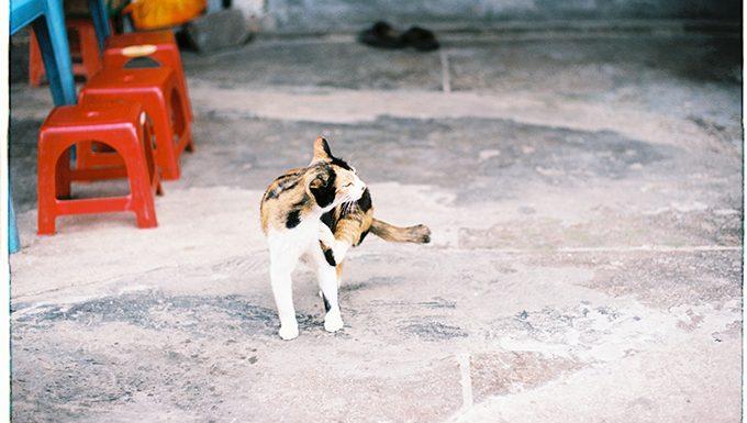 Katze kratzt mit Hinterbein