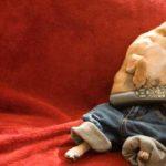 Dog Sleeping In 2