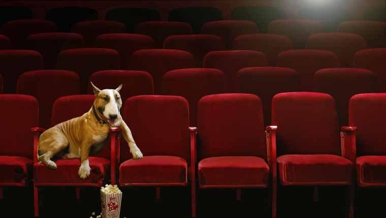 Traurige Hundefilme