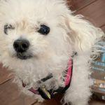 Leia the dog waits for a Cookie Pal treat