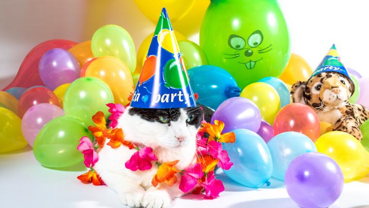 Katzenfeiern machen Ihren eigenen Feiertagstag