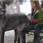 TORONTO, ON - SEPTEMBER 19 - Morgan sits on owner, Cathy Payne