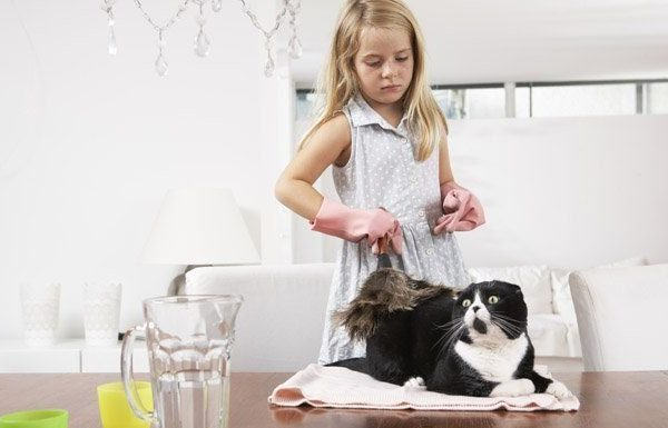 little girl dusting a cat