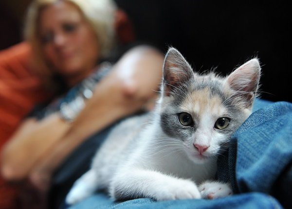 """""""Close-up of a cat, laying comfortably and warm on the legs of a woman."""""""