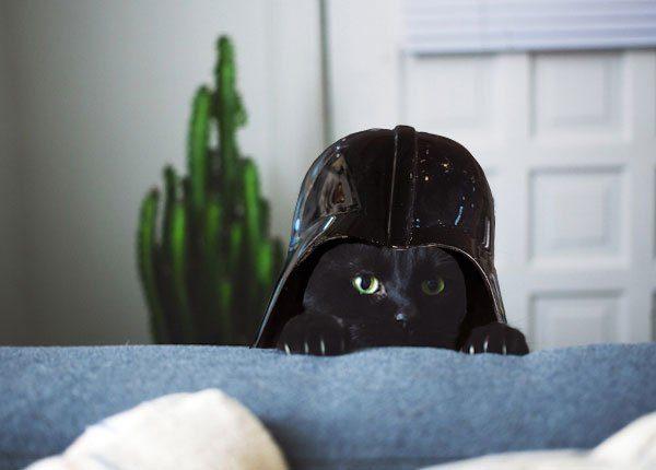cat with darth vader helmet