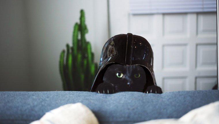 Katze mit Darth Vader Helm