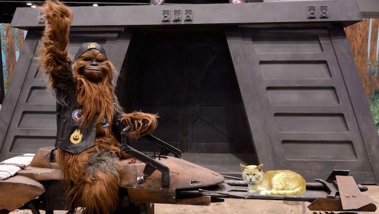 Chewbacca Reitspeeder mit Katze