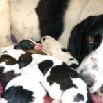 25 MEHR süße Mama Hunde und ihre Welpen zum Muttertag [PICTURES]