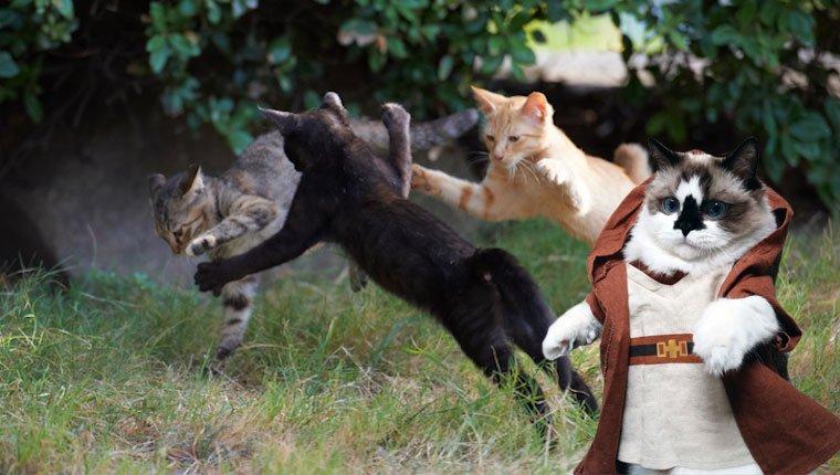 Jedi Katze trainiert andere Kätzchen