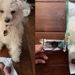 DogTime Review: Schmecken die Leckerbissen mit leckeren Kämmen gut und helfen sie der Zahngesundheit Ihres Hundes?