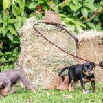Muttertag: 25 süße Bilder von Welpen und ihren Mama-Hunden