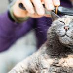 Leitfaden zur Pflege einer Katze