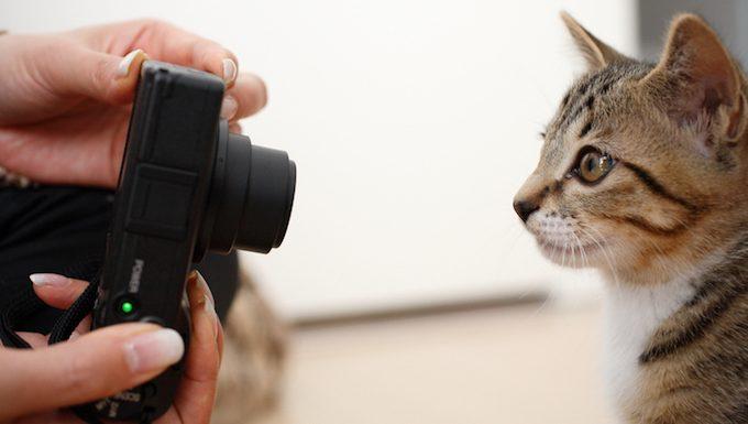 Holen Sie sich auf das Niveau Ihrer Katze