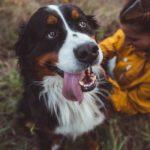 6 Hunderassen, die die besten Tiere zur emotionalen Unterstützung sind