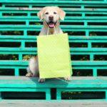 Beautiful Golden Retriever dog holding green shopping bag in teeth