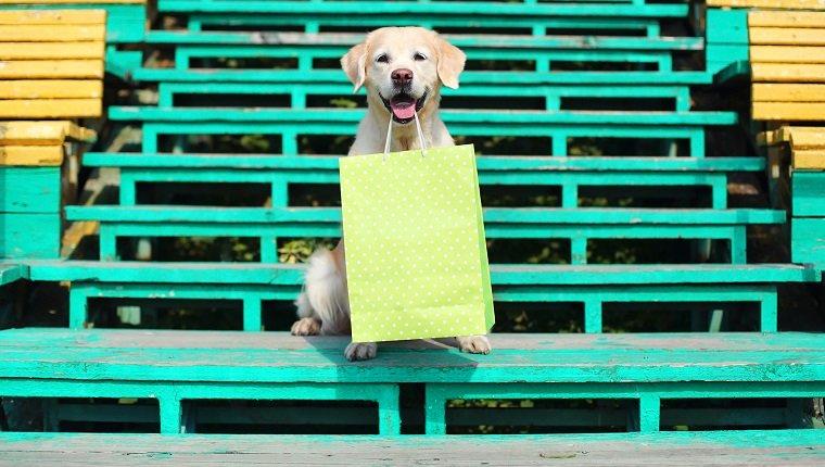 Schöner Golden Retriever-Hund, der grüne Einkaufstasche in den Zähnen hält