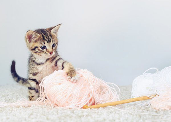Kitten and yarn for world wide knit in public day